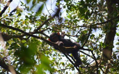Tag 2 – Unser Besuch bei den Schimpansen