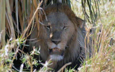 Tag 8 – Noch eine letzte Safari und zurück nach Gulu